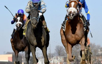 Lynwood Graduate Frost Wise Wins Bayshore Stakes