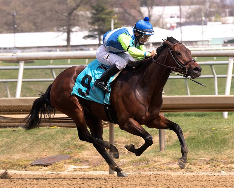 Chalon Wins Primonetta Stakes at Laurel.