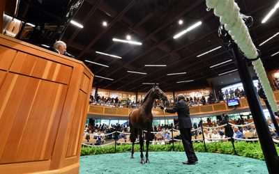 Medaglia d'Oro Filly Graduates at Tampa